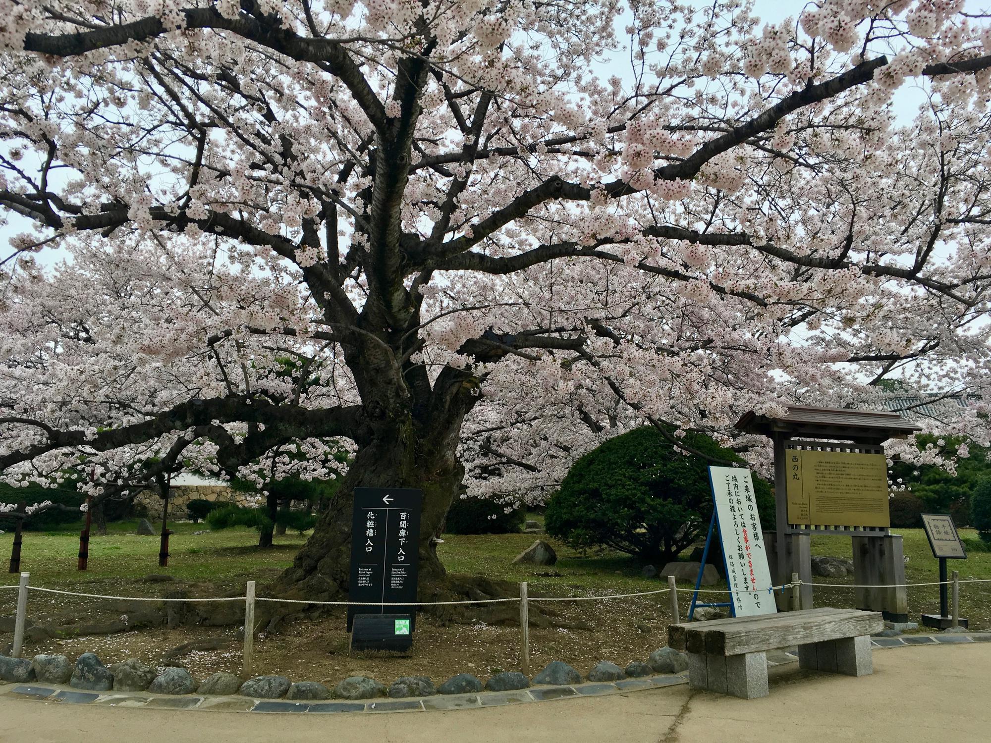 🇯🇵 Himeji, Japan, april 2017.