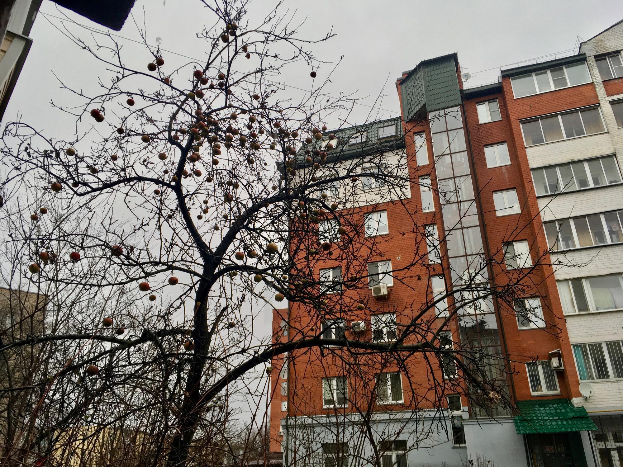 🇷🇺 Калуга, Россия, январь 2018.