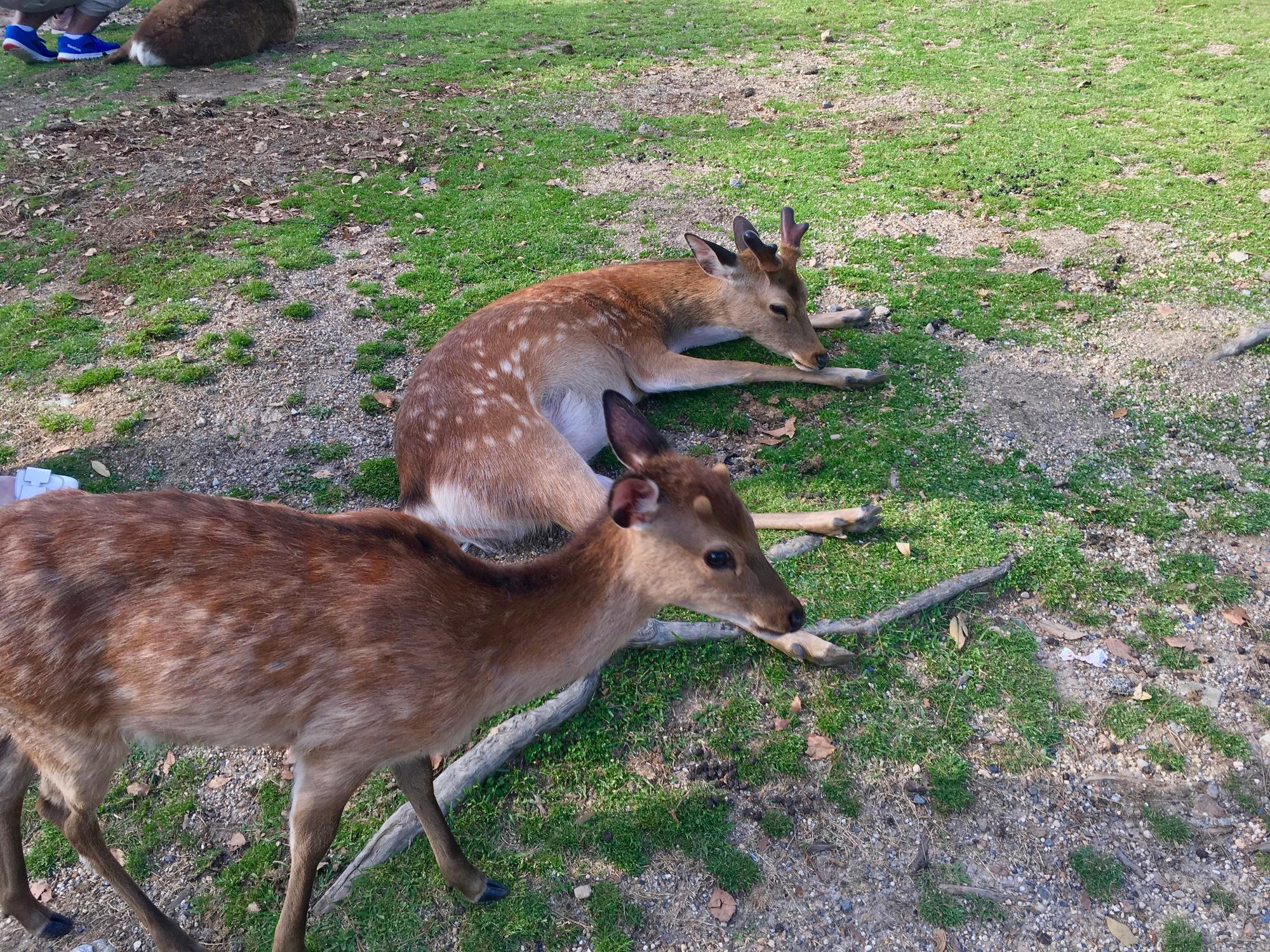 🇯🇵 Nara, Japan, may 2018.