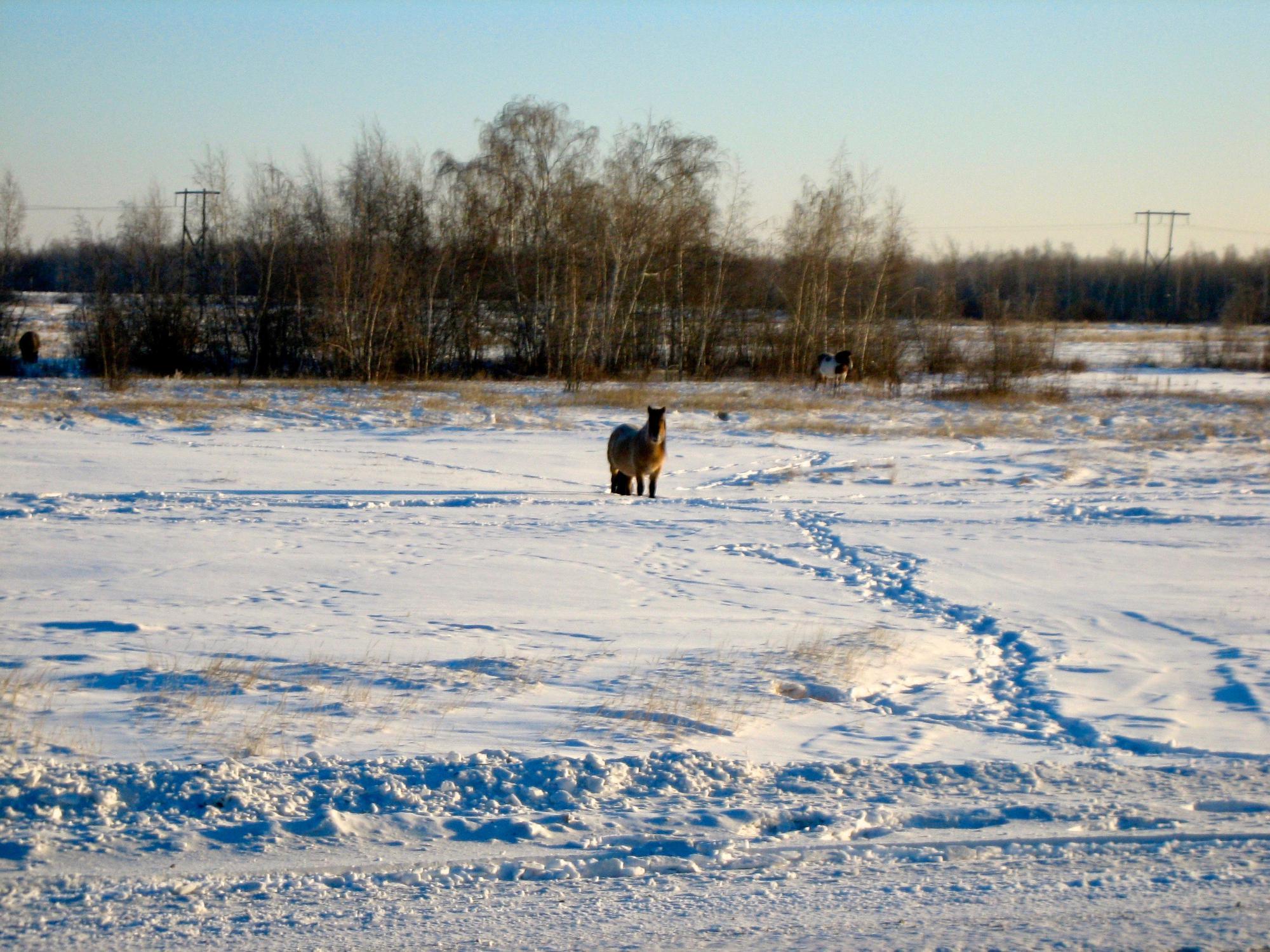 🇷🇺 Якутск, Россия, ноябрь 2012.
